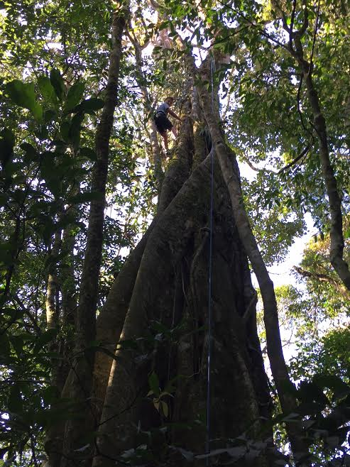 tree climbing at Monteverde Friends School