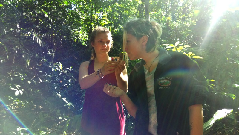 Study Abroad and Gap Year students in Monteverde discover wild Ginger.